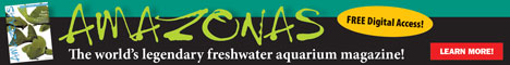 Please visit Amazonas Magazine, proud sponsors of PlanetCatfish.com