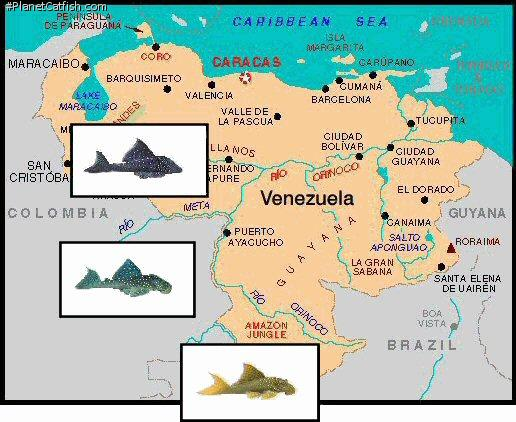 Map of venezuela with 3 pictures of L128 & L200