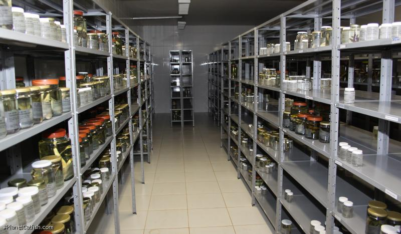 In the lab, hundreds of specimens await examination and classiciation. This is where new species are \
