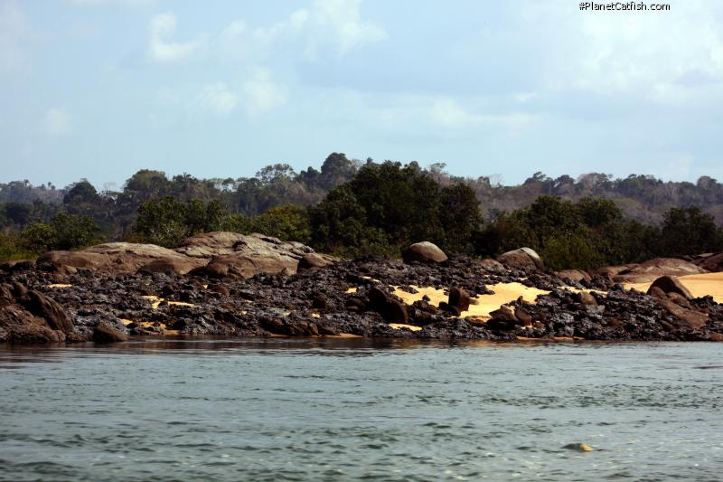 Classic Xingu biotope. Sand, sun cracked granite rocks and obsidian laterite which provides an otherworldy feel