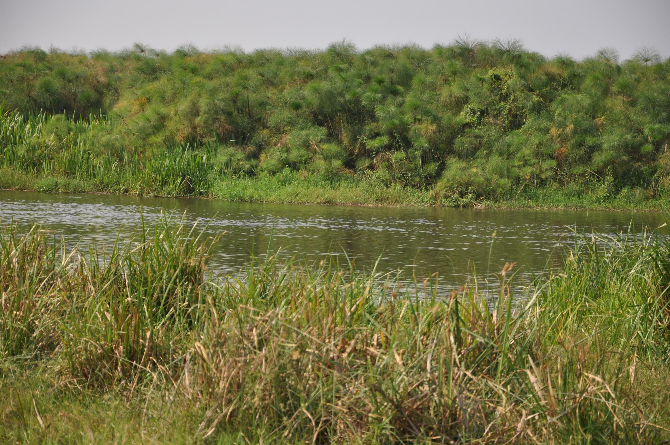 1. Typical habitat, Nile delta at Lake Albert