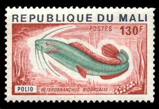 Heterobranchus bidorsalis