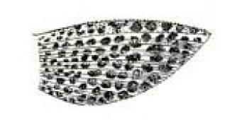 Hypostomus niceforoi