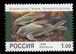 Synodontis eupterus