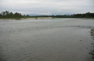 Microglanis sp. `RIO SALI`