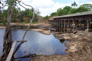 Guyanancistrus sp. (1)