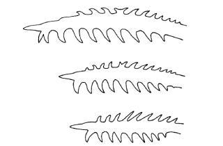 Microglanis pellopterygius