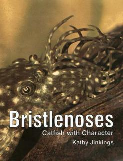 Bristlenoses Catfish with Character