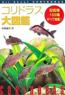 All About Corydoras