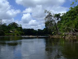 The Gran Rio in the upper Surinam River System is the typical habitat of C. boesemani
