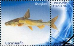 Cryptarius truncatus