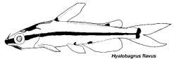 Hyalobagrus flavus