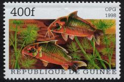 Corydoras(ln8sc1) britskii