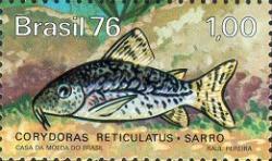 Corydoras(ln8sc3) sodalis