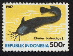 Clarias batrachus