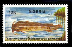 Malapterurus electricus