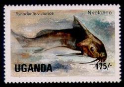 Synodontis victoriae