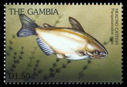 Pangasianodon gigas