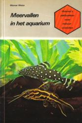 Meervallen in het Aquarium