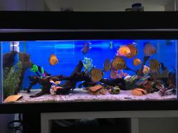 Adelino's aquarium