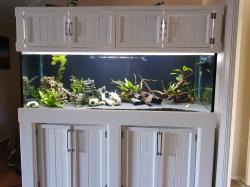 Display Tank (6Ft)