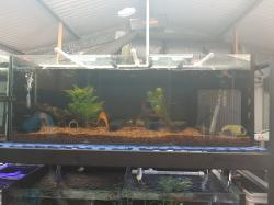 Rack Section 2 (L333 Plecos)