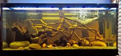 75 gal Panaqolus tank
