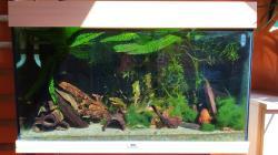 My Aquarium (125 l)
