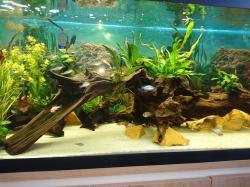 Mancave aquarium