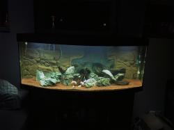 My Aquarium()