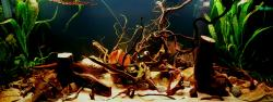 My Aquarium(2)
