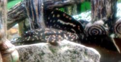 My aquaria.. tank no/1