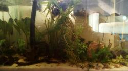 Black Water community tank