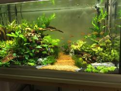 275 liters aquascaping aquarium.