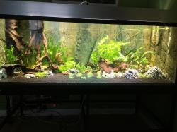 Stue aquarium