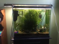 Community tank 30 gallon kitchen