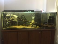 L201 / L102 split tank 100 gallon