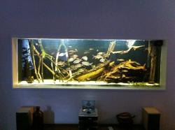 Tank 03: Show Tank