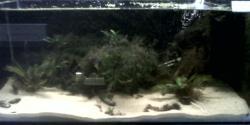 Tank 17: Small Asian Cats