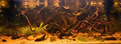 My Aquarium No.1