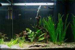 My Aquarium No.2 Juwel Lido 120