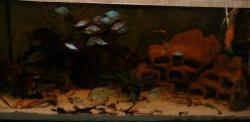 My Aquarium(5)