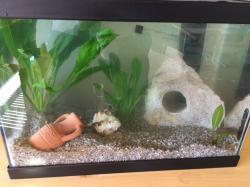 My little aquarium