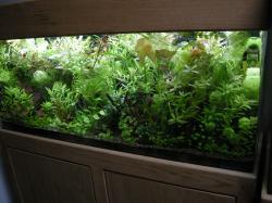 My Aquarium(4)