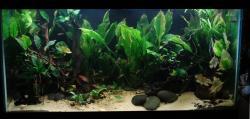 My 90gal Aquarium