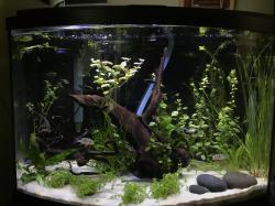Display Tank