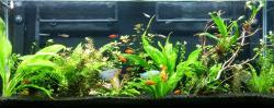 55-Gallon Community Aquarium