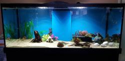 500L  ND Aquarium
