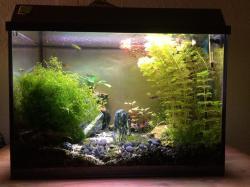 Juwel Tank