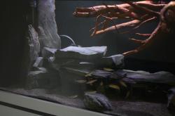 L128 Aquarium